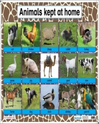 Animals kept at home/Wild animals - PP2