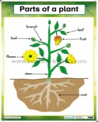 Parts of plants/Fruits we eat - PP2